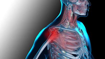 Articolazioni E Muscoli