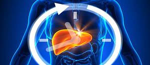 Antiossidanti Per Fegato E Metabolismo