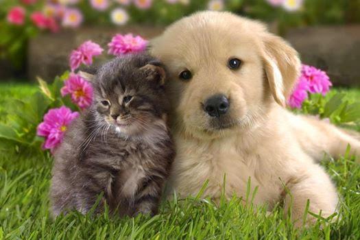 Come Preparare Un Repellente Naturale Per Cani E Gatti