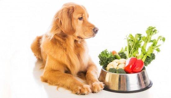 Snack Per Cani