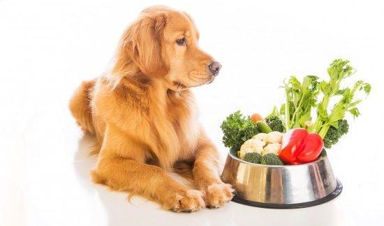 Snack Per Cani E Gatti, Quali Sono I Migliori?