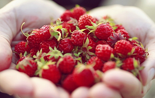 Antiossidanti Per Cuore Vasi E Polmoni