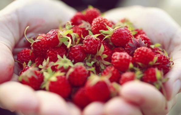Antiossidanti Per Cuore, Vasi E Polmoni