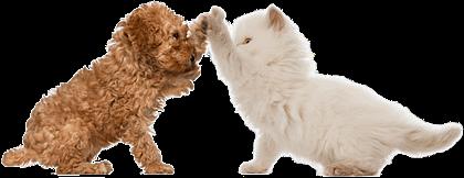 Antiparassitari Naturali Per Cani E Gatti