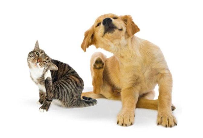 Repellente Naturale Per Cani E Gatti